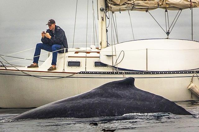 whale man.jpg